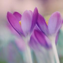 voorjaarsgevoel