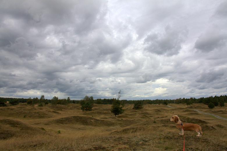 Kale Duinen nabij Appelscha - Riva tijdens een wandeling in het gebied De Kale Duinen bij Appelscha
