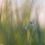 Verstopt in het gras