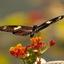 Vlinder in heel mooi licht
