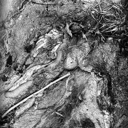 kunst uit een boom .. zoek het varkentje en wat al niet meer..