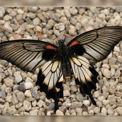 Vlindertuin Berkenhof 7