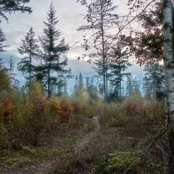 Sfeervol pad tussen bos en heide