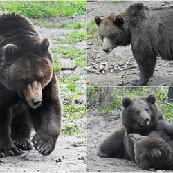 berenfamilie