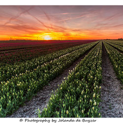 Polder sunset