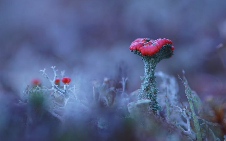 Bloeiend mos - bloeiend mos ik vind het toch altijd mooi om even vast te leggen het is heel klein  maar als je het weet kan je er op letten .<br /> m