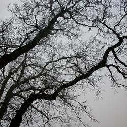 Nog een boom in ochtendmist