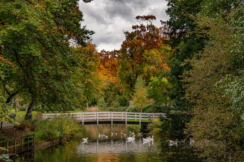 LDH 20201021 wilhelminapark-6936 v - En dan kom je zo maar in eens dit doorkijkje tegen in het park. Schilderachtig mooi. Herfstkleuren in optima form