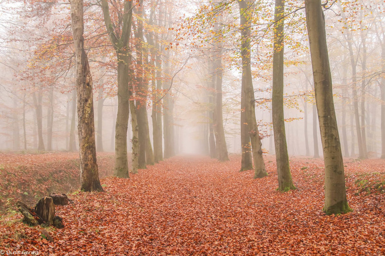 Herfst in Drenthe - Bedankt voor het kijken en jullie reacties op mijn vorige upload.<br /> Eerlijke reacties, opmerkingen en tips worden gewaardeerd