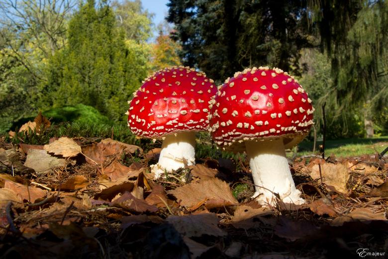 На Прикарпатті зареєстровано нові випадки отруєння грибами (відеосюжет)