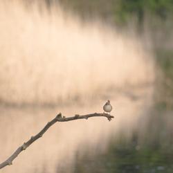 Een gewoon mooi vogeltje