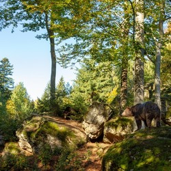 Beren in Bayerischer Wald