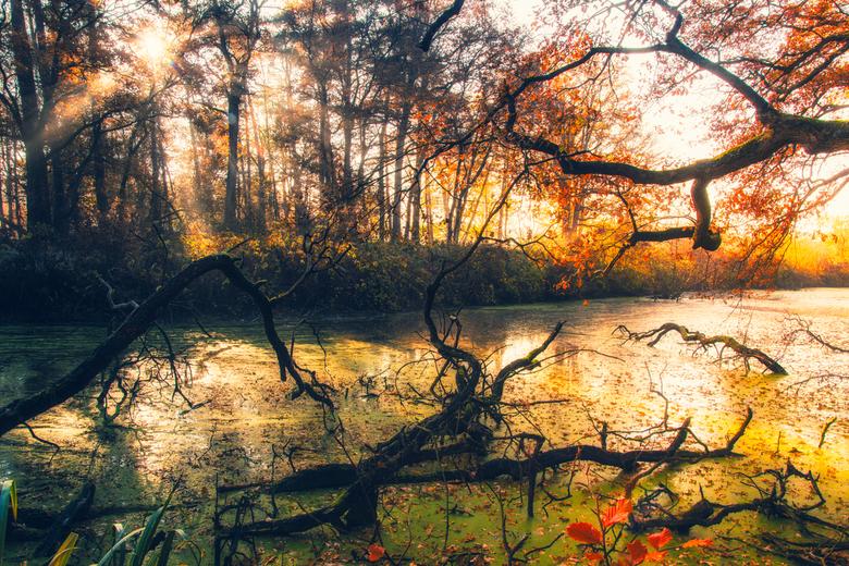 Green River - Aan de oever van de Beneden Regge nabij Ommen.