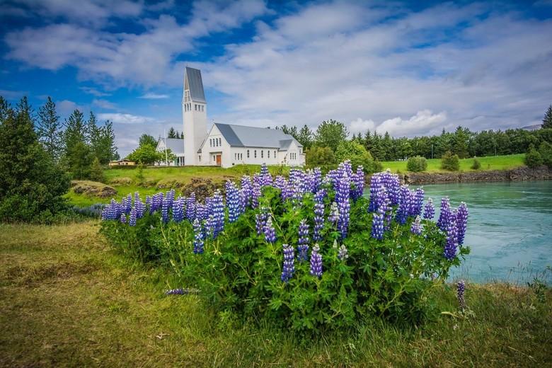 Ijslandse kerk - Onze eerste kennismaking met de Lupines in Ijsland