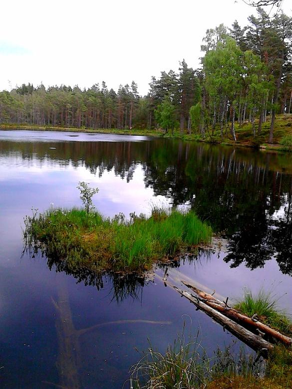 Love is the answer.... what was the question - Liefde voor de natuur, voor Zweden en voor alles wat leeft.
