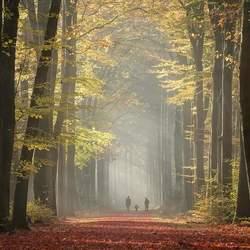 AutumnWalk..