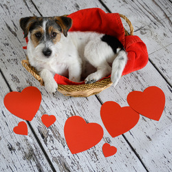 Valentijn Sien