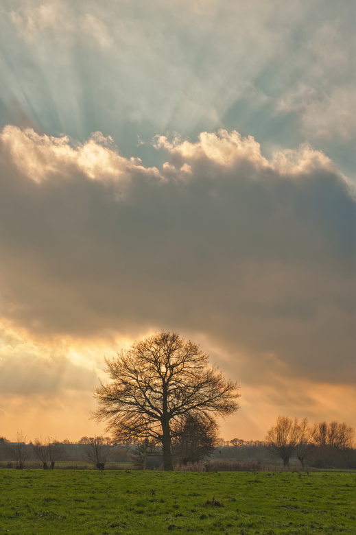 THE LONE TREE STOUTENBURG - De Schammer Stoutenburg