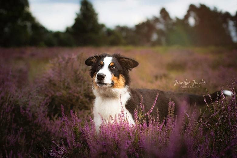 Odin the Dog - 5,5 jaar geleden gestopt met fotografie, omdat ik er geen plezier meer in had door externe factoren. Sinds kort een puppy genaamd Odin