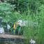 vijvervissen dief