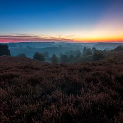Vivid Dawn