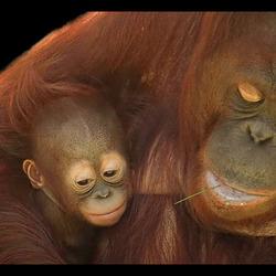 Bewerking: de verschillen tussen twee baby's.... 2