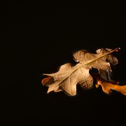 Duet voor 2 bladeren