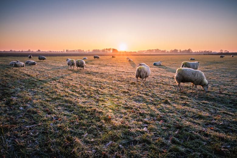 Zonsopkomst met schaapjes -