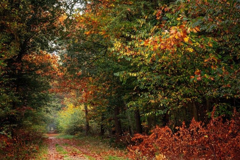 Nog meer kleur - We genieten nog maar even van de heerlijke kleuren van de herfst