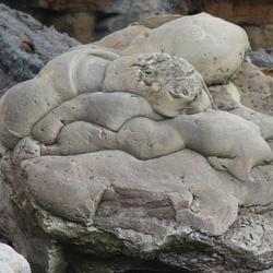 steen / Rots