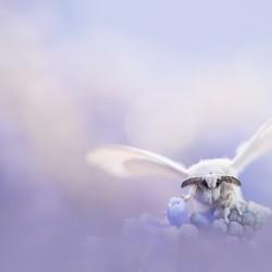 sweet little butterfly