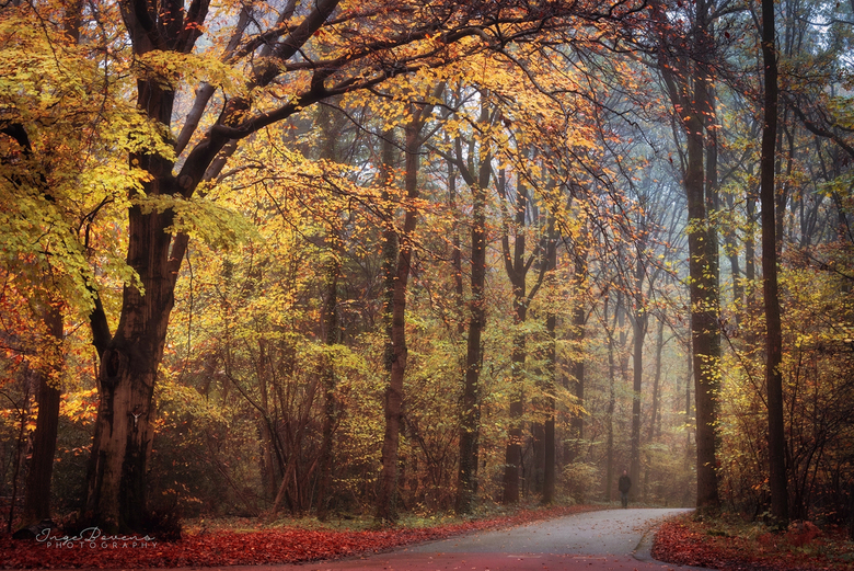 Carnival of the Forest. -