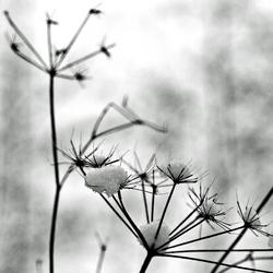 Winter in black and wihite