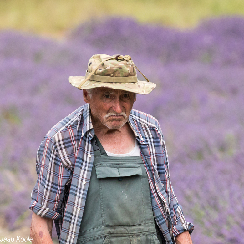 Lavendelboer