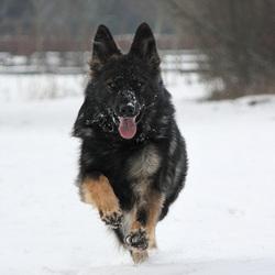 Zoë Running