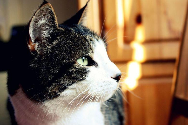 loulou de kat  - mijn kat loulou