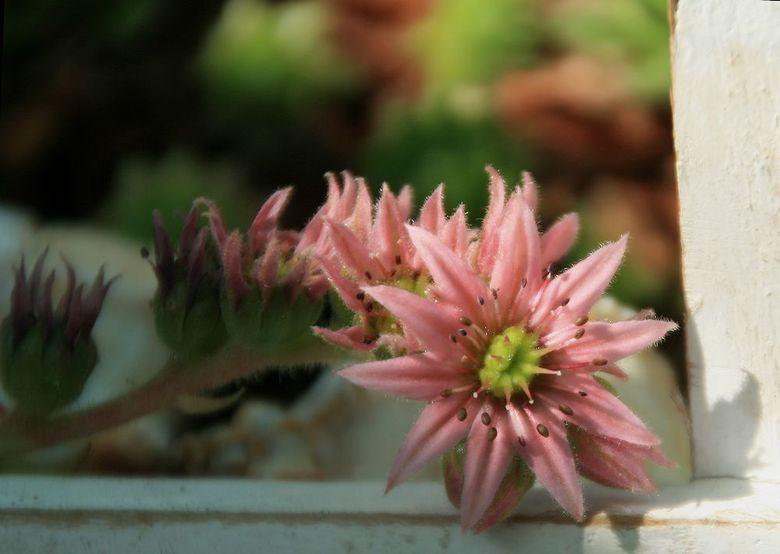 Pink Ribbon - Twee omdat het de laatste dag is van de Maand waar stil wordt gestaan bij Borstkanker maar ook voor alle andere vormen.<br /> <br /> g