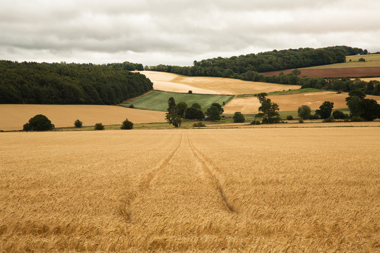 the Cotswolds II - the gentle landscape - wonderschoon en subtiel