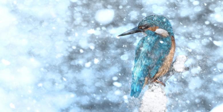 'sneeuw'vogel