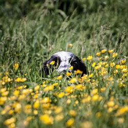 Libby in het gras
