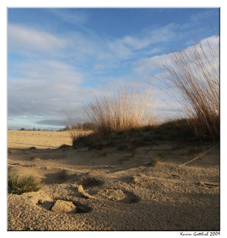 Duinen - Nog een foto uit de Drunense duinen. 28 dec. 2009.<br /> <br /> Groetjes,<br /> <br /> Karin