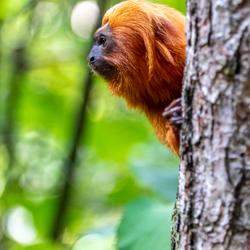 aap in apenheul