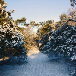 Winter Art 6
