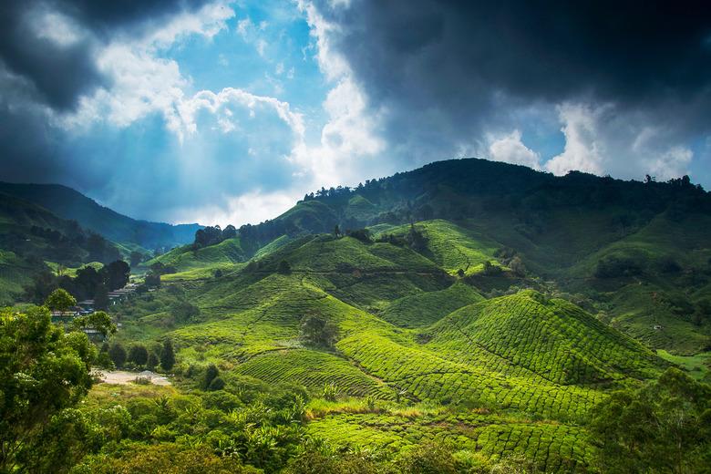 Cameron Highlands - Theeplantages in Cameron Highlands - Maleisië.<br /> De BOH tea plantation is de grootste theeplantage in Maleisië. Alle theepluk