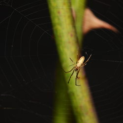 Spin+web