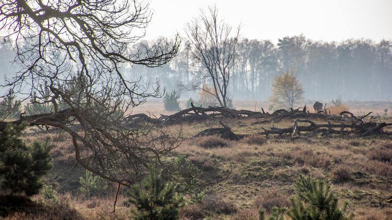 Strabechtse Heide -