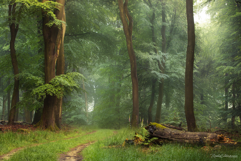 Ancient forrest