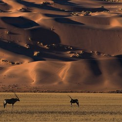Oryx & Mars Dunes