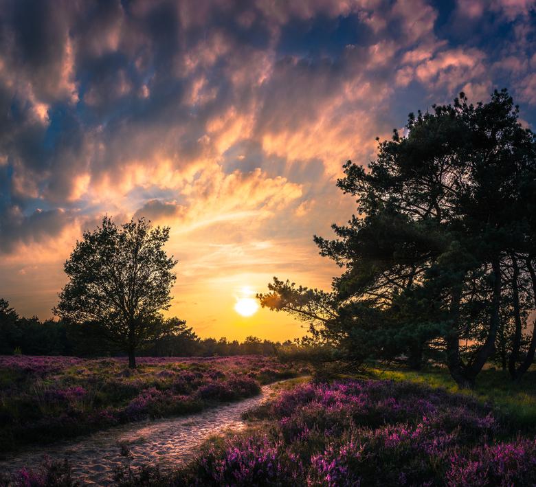 dwingelderveld - dwingelderveld zonsondergang