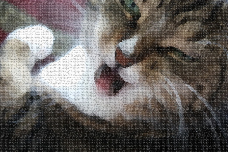 Poekie de kat -